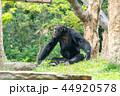 動物 陸上動物 サルの写真 44920578