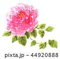花 薔薇 ピンクのイラスト 44920888