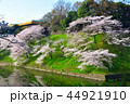 桜 春 染井吉野の写真 44921910