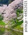 桜 春 染井吉野の写真 44922025