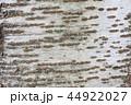 ソメイヨシノ 樹皮 44922027
