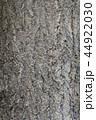 イチョウの樹皮 44922030
