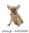 動物 ペット 愛玩動物の写真 44926894