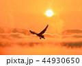 白鳥 猪苗代湖 朝日の写真 44930650