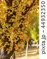 紅葉 葉 葉っぱの写真 44932350