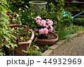 庭の鉢植え 花壇 じょうろ バケツ 44932969