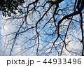 悲しい 冬 木の写真 44933496