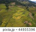 米 景色 風景の写真 44935396
