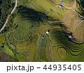 米 景色 風景の写真 44935405