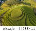 米 景色 風景の写真 44935411