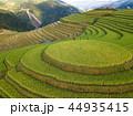 米 景色 風景の写真 44935415