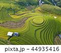 米 景色 風景の写真 44935416