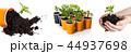 植物 若い 若の写真 44937698