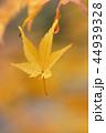 落ち葉 落葉 紅葉の写真 44939328