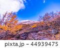 富士山 山 空の写真 44939475