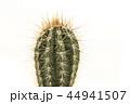 さぼてん サボテン 仙人掌の写真 44941507