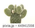 さぼてん サボテン 仙人掌の写真 44941508