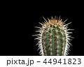 さぼてん サボテン 仙人掌の写真 44941823