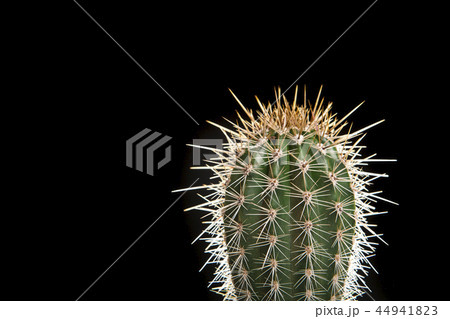 Green single cactus on a black background 44941823
