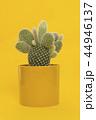 さぼてん サボテン 仙人掌の写真 44946137