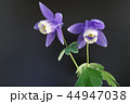 クローズアップ 花 植物の写真 44947038