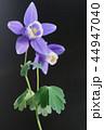 クローズアップ 花 植物の写真 44947040