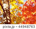 雑木林の紅葉 44948763