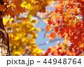 雑木林の紅葉 44948764