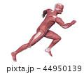 人体 筋肉 解剖のイラスト 44950139