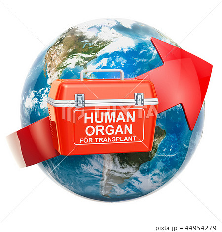 Global donation and transplantation human organs 44954279