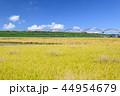 風景 秋 田んぼの写真 44954679