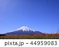 富士山 山 花畑の写真 44959083