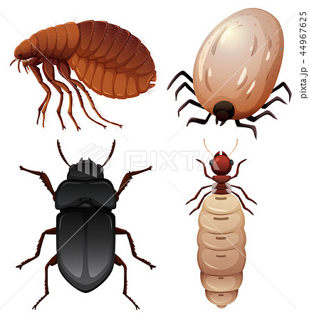 Set of insect on white background 44967625