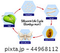 Science silkworm life cycle 44968112