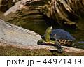 亀 カメ かめの写真 44971439