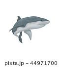 ベクトル サメ シャークのイラスト 44971700