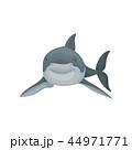 ベクトル サメ シャークのイラスト 44971771