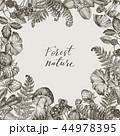 イラスト 森林 林のイラスト 44978395