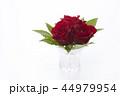 花瓶に飾った赤いバラ 44979954