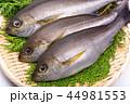 魚 伊佐幾 伊佐木の写真 44981553