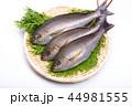魚 伊佐幾 伊佐木の写真 44981555