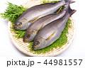 魚 伊佐幾 伊佐木の写真 44981557