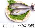魚 伊佐幾 伊佐木の写真 44981565