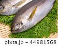 魚 伊佐幾 伊佐木の写真 44981568