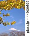 富士山 秋 黄葉の写真 44989699