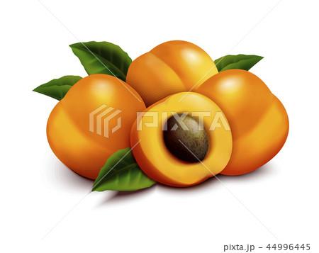 Apricot fruit illustration 44996445