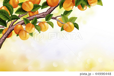 Apricot orchard background 44996448