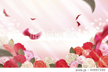 Pink bokeh background with roses 44997390