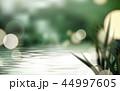 湖 背景 草のイラスト 44997605