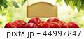 広告 りんご リンゴのイラスト 44997847